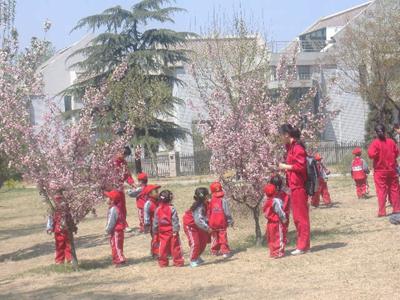 翡翠城幼儿园春天主题活动--春天的花
